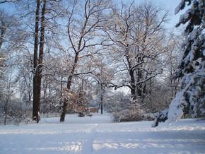 Zámecký park – zima