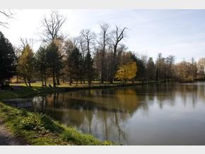 Zámecký rybník – rybník
